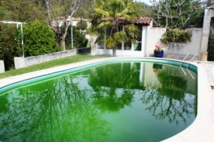 Nasty algae can wreck havoc with a pool.