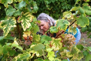 Martine gets the perfect grape shot.