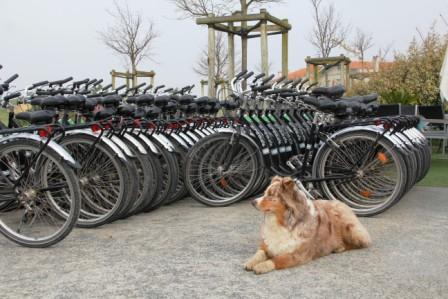 Plenty of bikes for rent on Aix