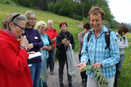 Hikers learn about wild herbs
