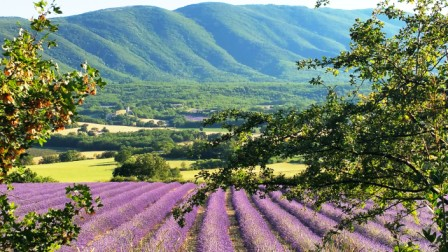 The lavender must like the heat. The color was especially vibrant this summer.