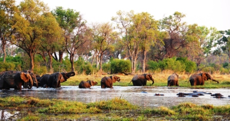 Elephants and hippos at sunset
