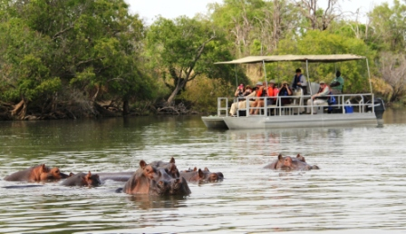 Hippos can stay submerged for six minutes.